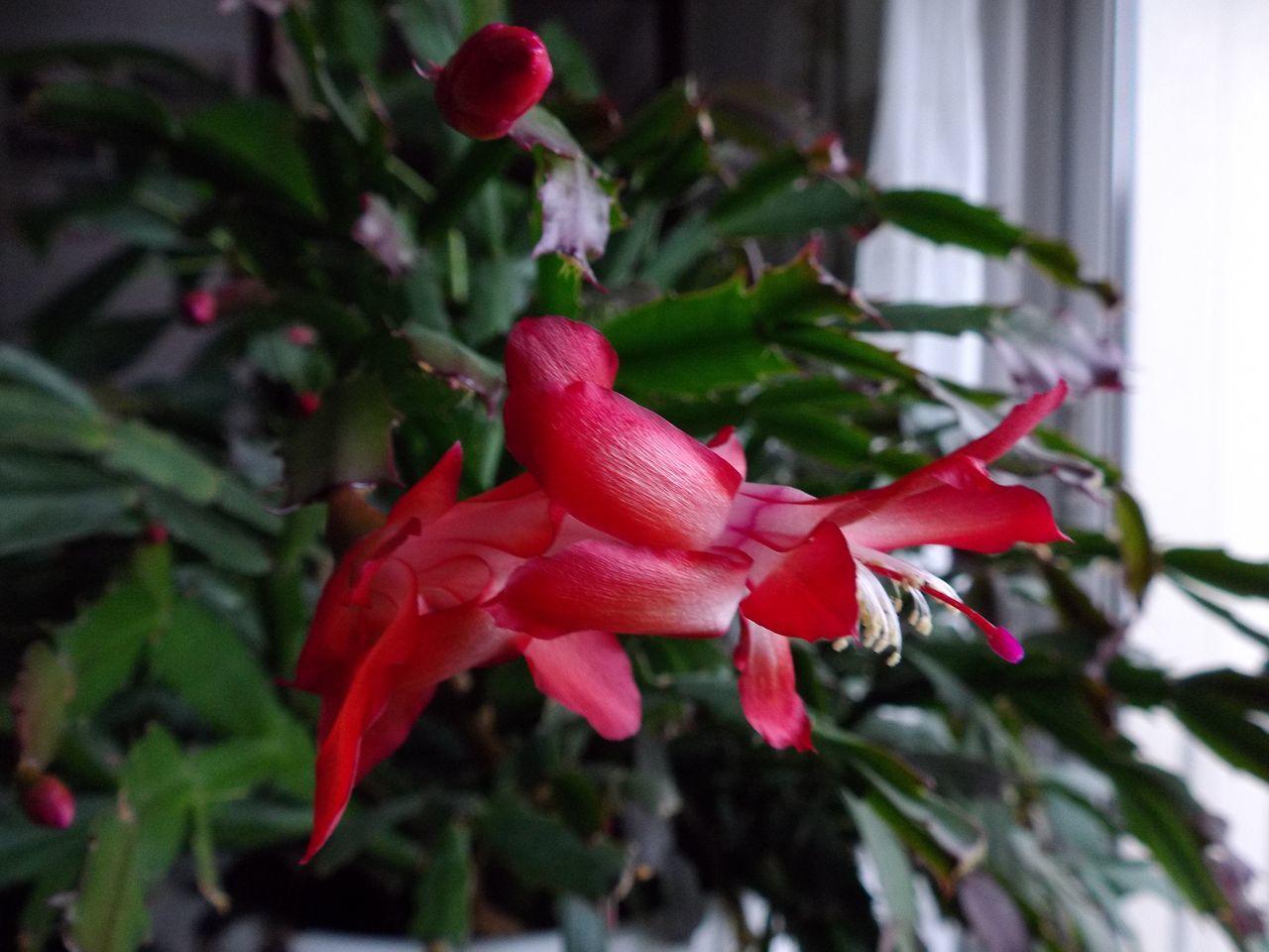 春近し_c0025115_21295721.jpg