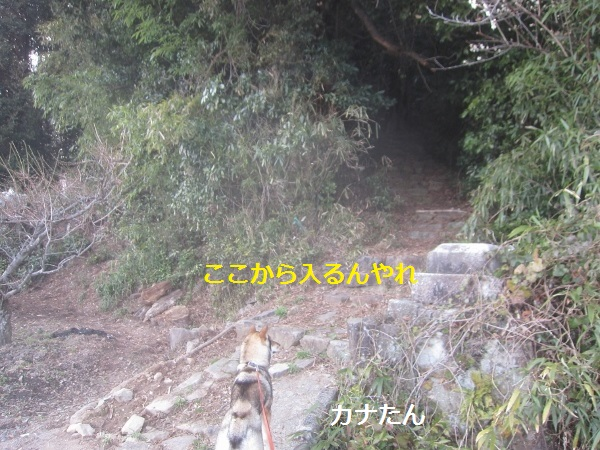 f0143123_1113287.jpg