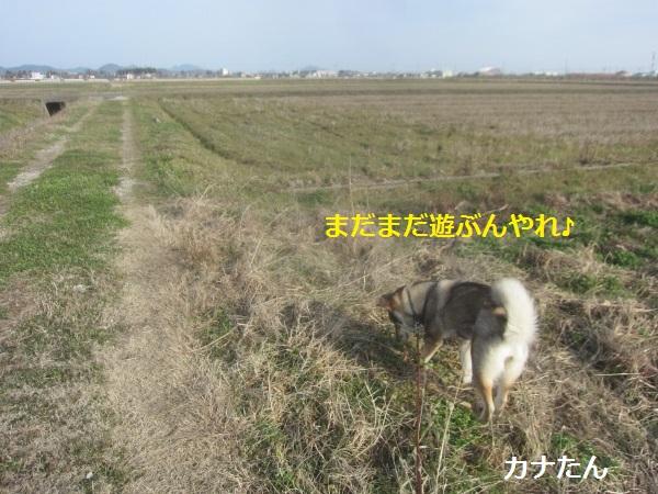 f0143123_1161589.jpg