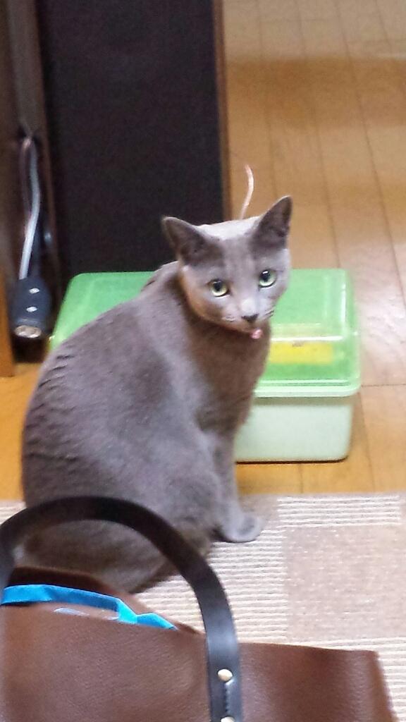 猫にゃん_a0240026_08554662.jpg