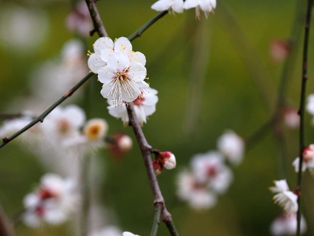 いつもの池 春への変化_f0324026_1445210.jpg