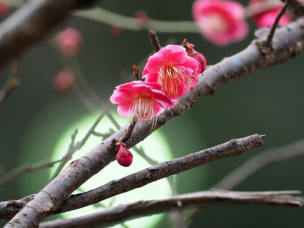 いつもの池 春への変化_f0324026_16103324.jpg