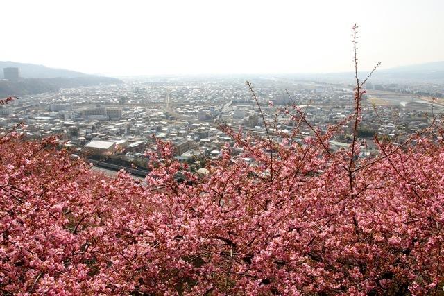 【まつだ桜まつり】_f0348831_13011142.jpg