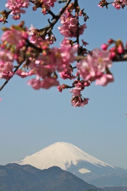 【まつだ桜まつり】_f0348831_13050364.jpg