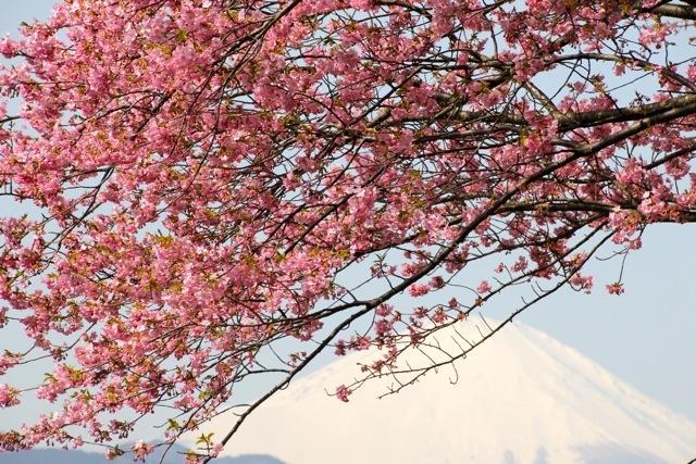 【まつだ桜まつり】_f0348831_13074059.jpg