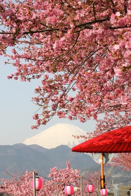【まつだ桜まつり】_f0348831_13081673.jpg