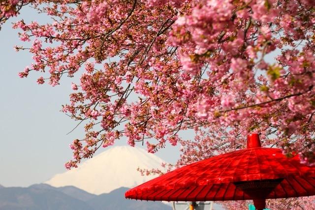 【まつだ桜まつり】_f0348831_13082126.jpg
