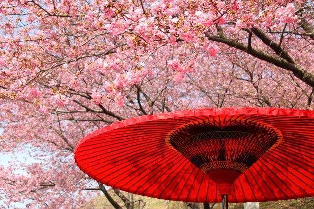 【まつだ桜まつり】_f0348831_13082915.jpg