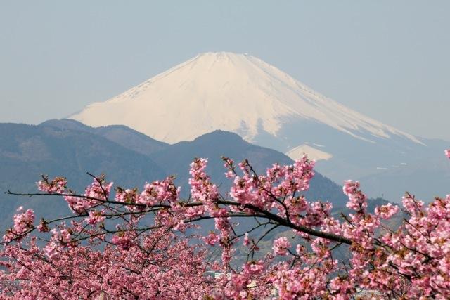 【まつだ桜まつり】_f0348831_13083871.jpg