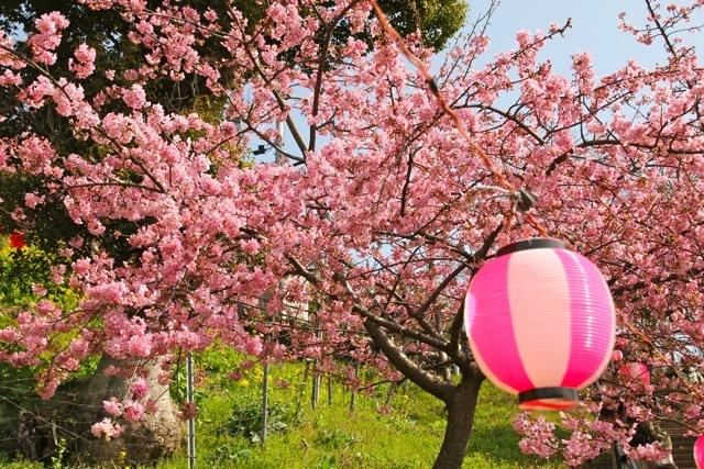【まつだ桜まつり】_f0348831_13084843.jpg