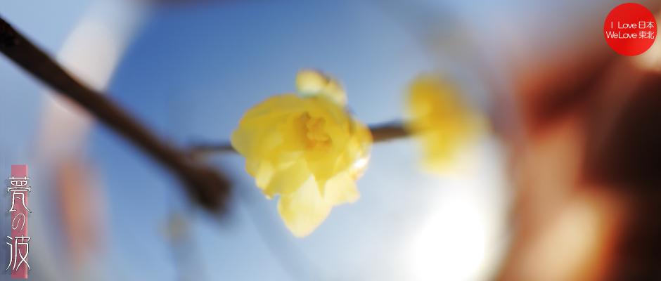 続 : 春色 × クリスタルボール ~蠟梅、椿~_b0157849_23123413.jpg