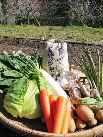 長尾ブランドの新鮮野菜!大人気の朝採りダイコンに続き、朝採りニンジン、朝採りほうれん草販売スタート!_a0254656_18444330.jpg