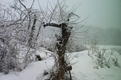 また積雪_c0110869_17373015.jpg