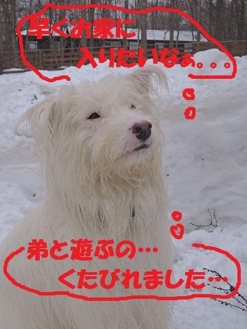 野辺山M川さん邸の現場より 15_a0211886_14394362.jpg