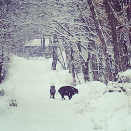 冬の終わりの合図 & オンラインショップ入荷のお知らせ。_d0028589_172756.jpg