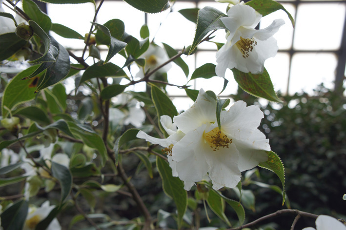 花盛りの温室_f0160407_534179.jpg