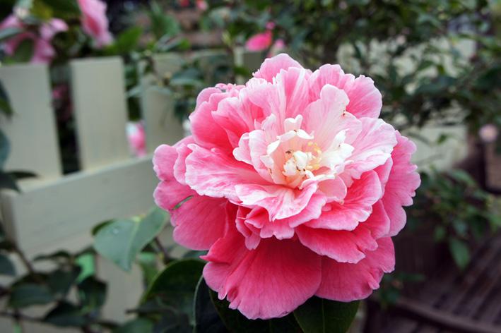 花盛りの温室_f0160407_541072.jpg