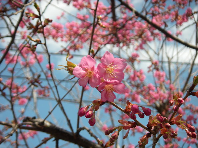 春が来た_a0074069_20101066.jpg