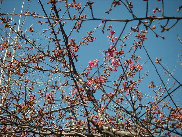 春が来た_a0074069_20125129.jpg