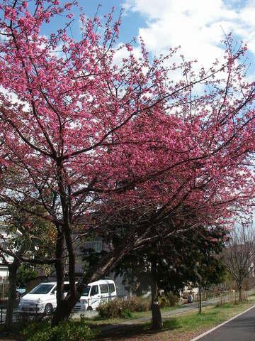 春が来た_a0074069_20141678.jpg