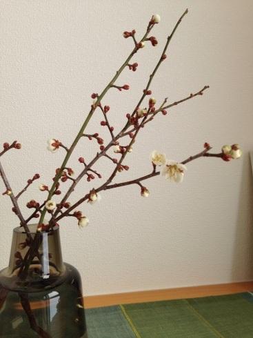 3月の休診日_a0324471_14152630.jpg