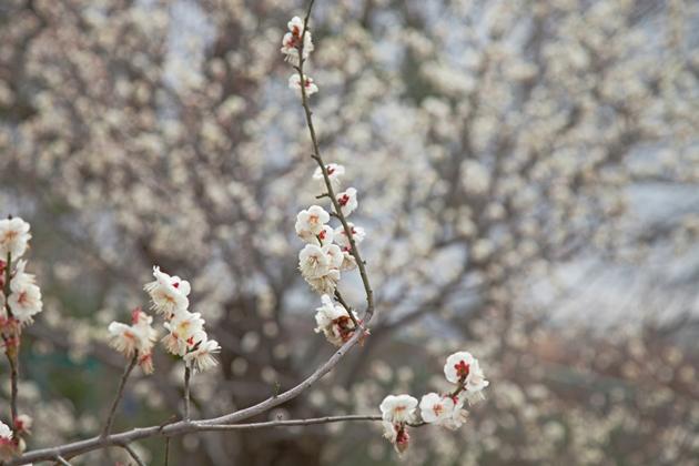 そこは春!!_e0305388_928339.jpg