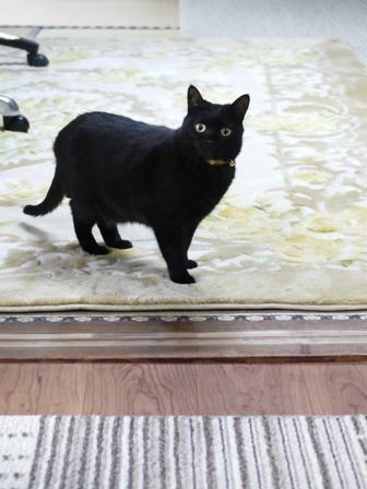 猫のお留守番 ひなちゃん編。_a0143140_21435463.jpg