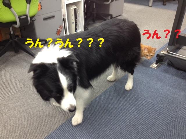 誰かいる!!!_c0226073_18261228.jpg