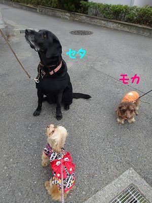 桃の節句に桃太郎_e0222588_17265033.jpg