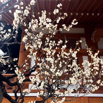 春近し_e0130607_2154126.jpg