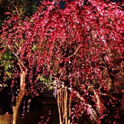 春近し_e0130607_2155110.jpg