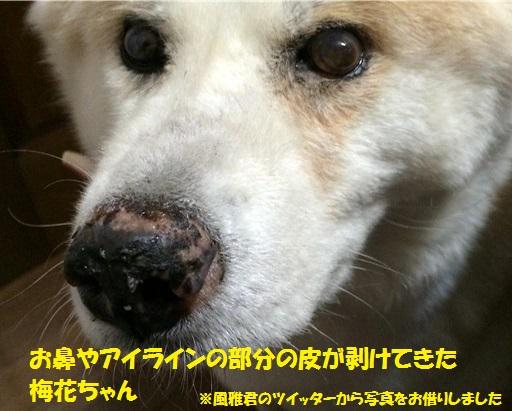 f0121712_96508.jpg