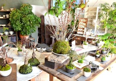3/15(日)桜盆教室 参加者募集中です_d0263815_16331192.jpg