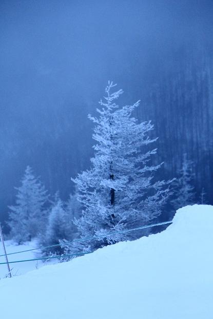 冬の信州 美ヶ原高原の旅 (2)_d0150720_9531839.jpg