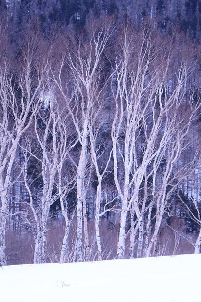 冬の信州 美ヶ原高原の旅 (2)_d0150720_9533391.jpg