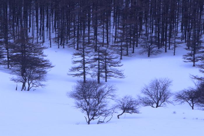 冬の信州 美ヶ原高原の旅 (2)_d0150720_9535295.jpg