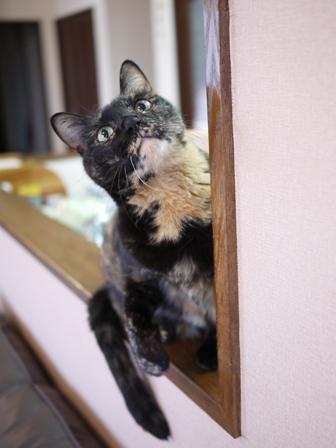猫のお留守番 ワサビちゃん天ちゃんう京くん編。_a0143140_21302176.jpg