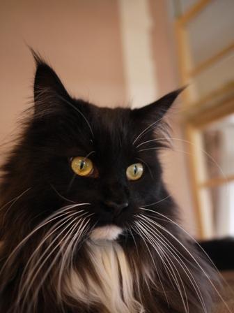猫のお留守番 ワサビちゃん天ちゃんう京くん編。_a0143140_2138172.jpg