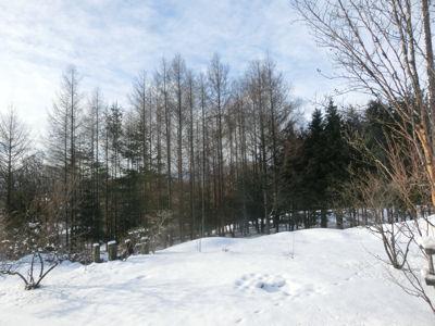 春の雪_f0019247_15513553.jpg