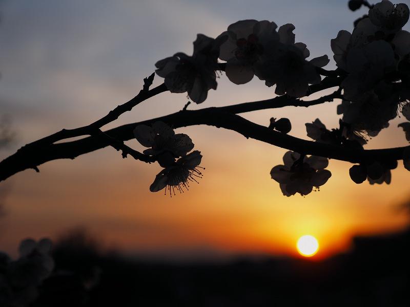 3月4日  ある日の夕焼け_e0013767_20391681.jpg