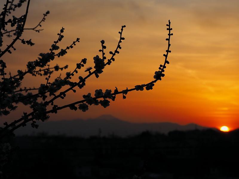 3月4日  ある日の夕焼け_e0013767_20393573.jpg
