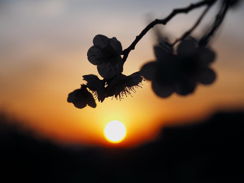 3月4日  ある日の夕焼け_e0013767_2039391.jpg
