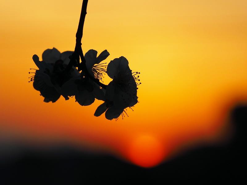 3月4日  ある日の夕焼け_e0013767_20394778.jpg