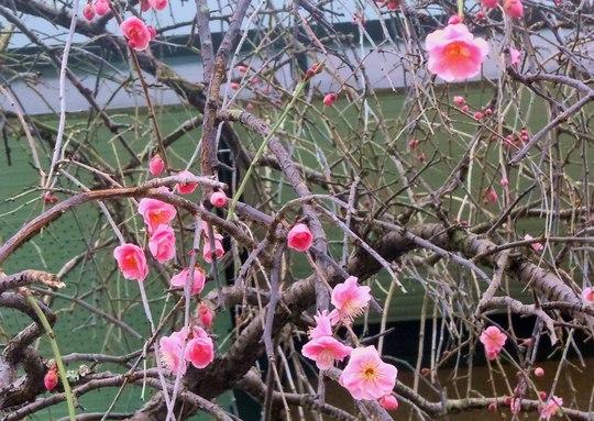 路傍の花、樹々の鳥(61) ~ 猫の目天気ですが ・・・ ~_b0102572_22554528.jpg