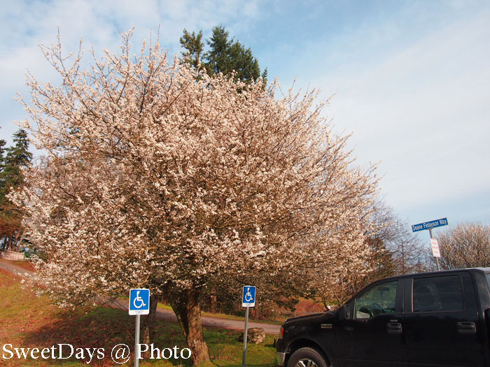 Spring is here in BC, Canada._e0046675_7203195.jpg