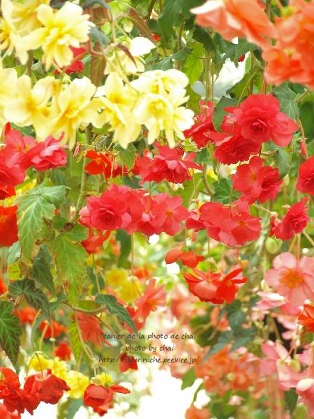 b0320893_20114033.jpg