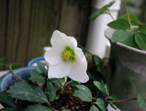 庭の花_c0081499_1521189.jpg