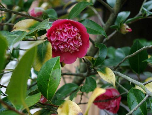 庭の花_c0081499_15225928.jpg