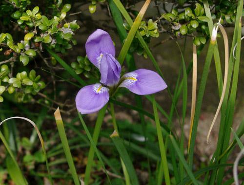 庭の花_c0081499_15265151.jpg