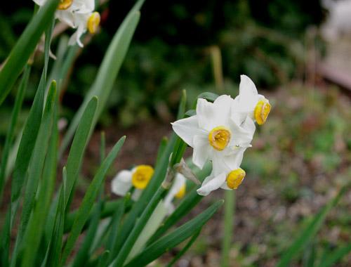 庭の花_c0081499_1526737.jpg